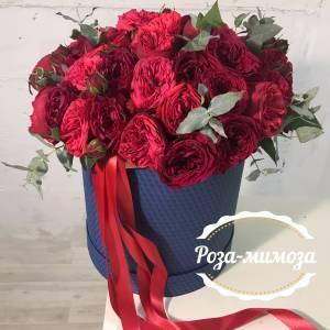 51 красная пионовидная роза шляпной в коробке с лентами R75